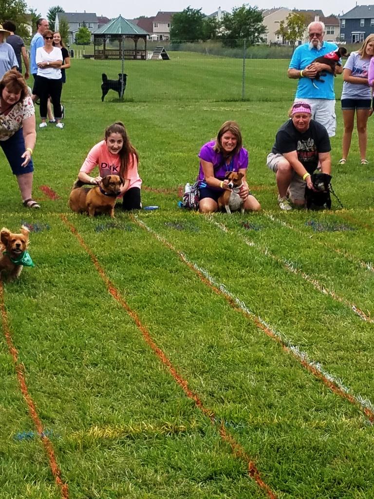 Doggy Derby